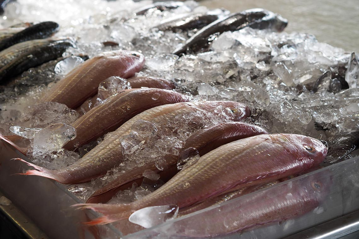 Encuentra en nosotros el mejor pescado fresco para restaurantes en Huelva - Toscamare, congelados frescos del mar