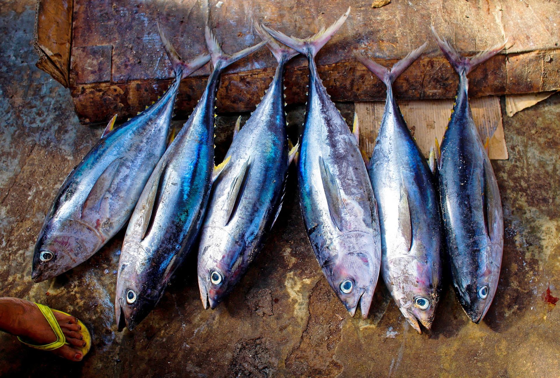 En Toscamare llevamos años siendo especialistas en atún - Toscamare, congelados frescos del mar