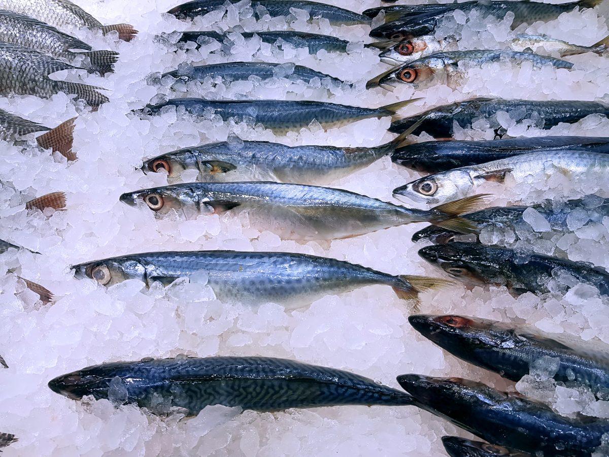 Cómo elegir entre las comercializadoras de pescado congelado - Toscamare, congelados frescos del mar